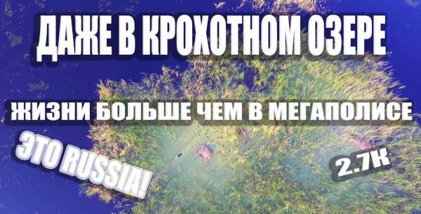 Озеро Иваново НСК, даже на маленьком озере жизни больше чем в мегаполисе!